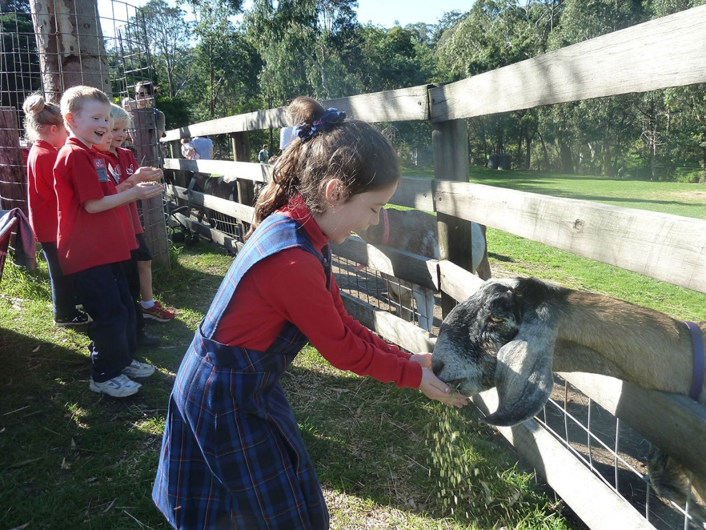 Preps to Collingwood Children's Farm